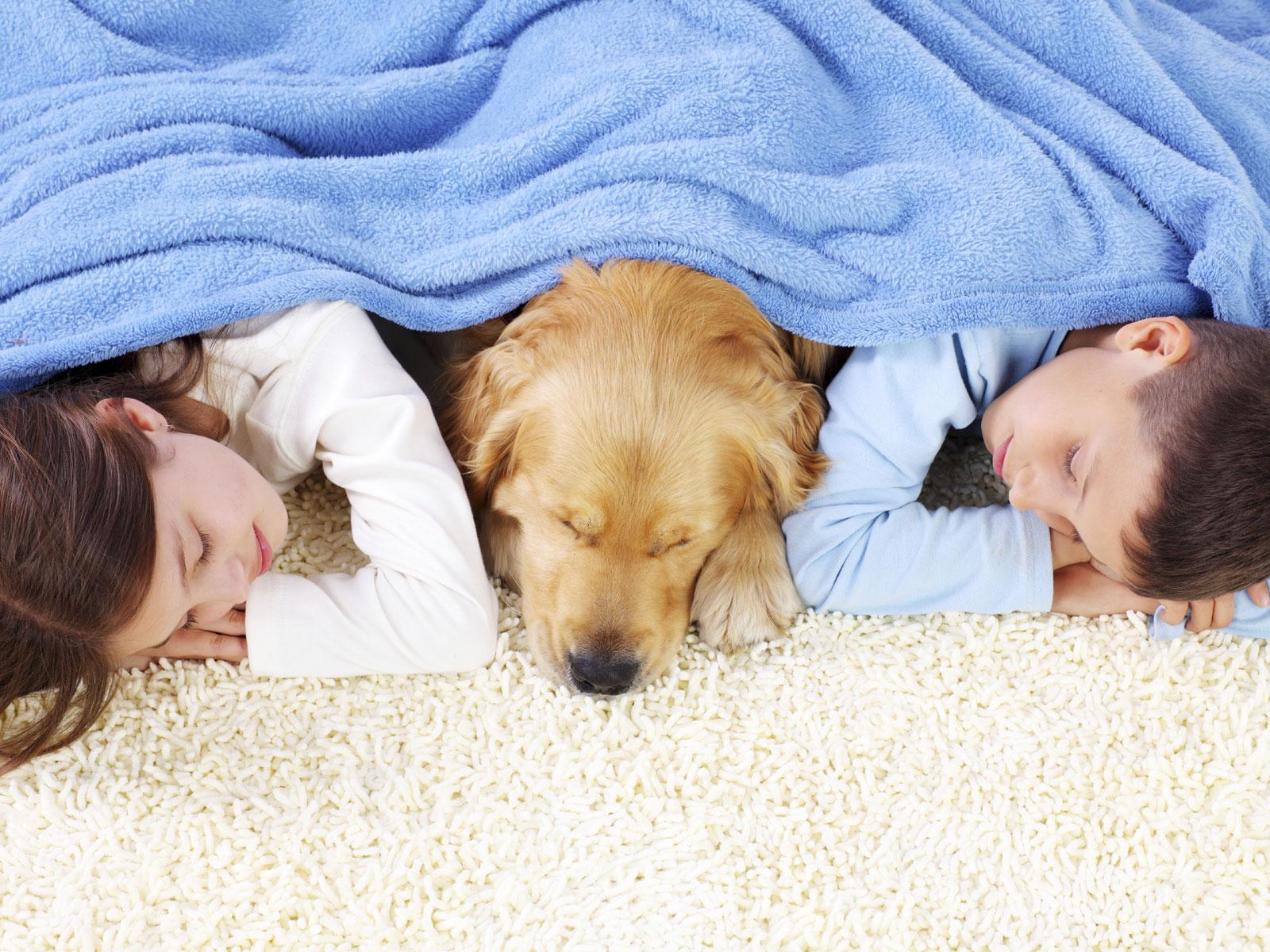 Odor Removal for fresh carpet smell