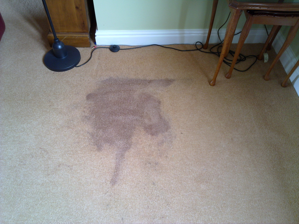 Why do carpet stains come back generations carpet cleaning - Remove carpet stains ...