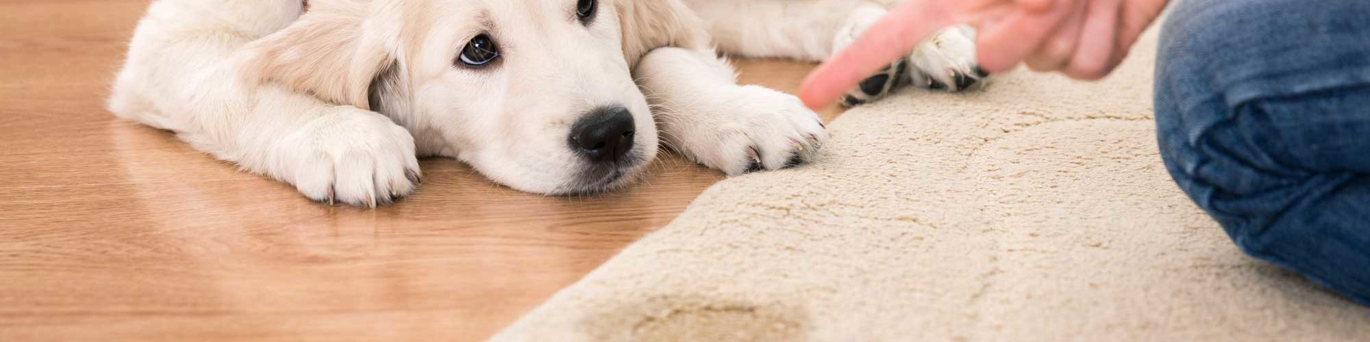 Pet Stain Removal - Generations Carpet Cleaning