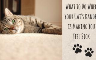 Cat's dander making you fell sick